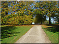 TQ1352 : The driveway, Polesden Lacey by Alan Hunt