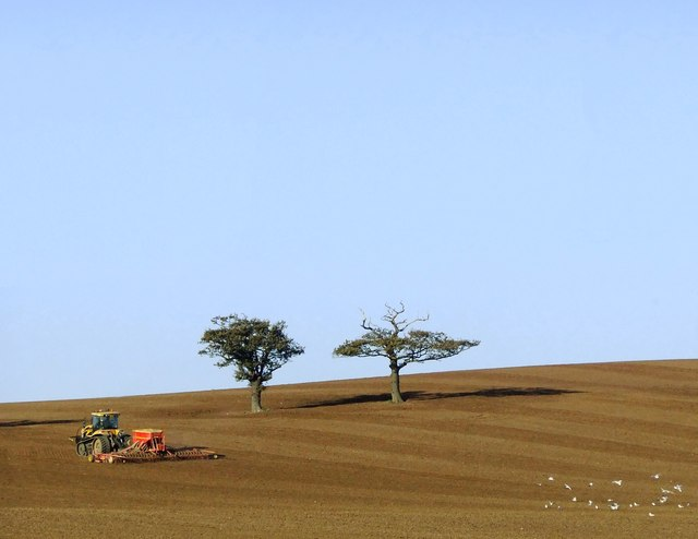 Prairie-style farming near Woodham Ferrers