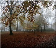 SK2579 : A misty October day in Granby Wood by Graham Hogg