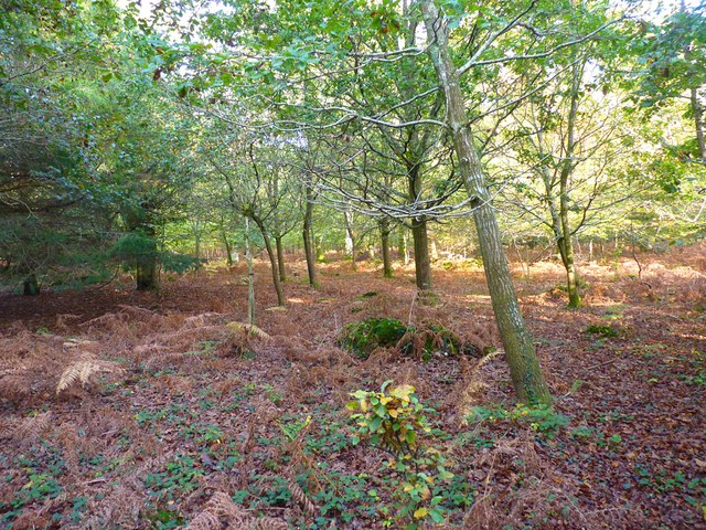 Inside Wilverley Inclosure