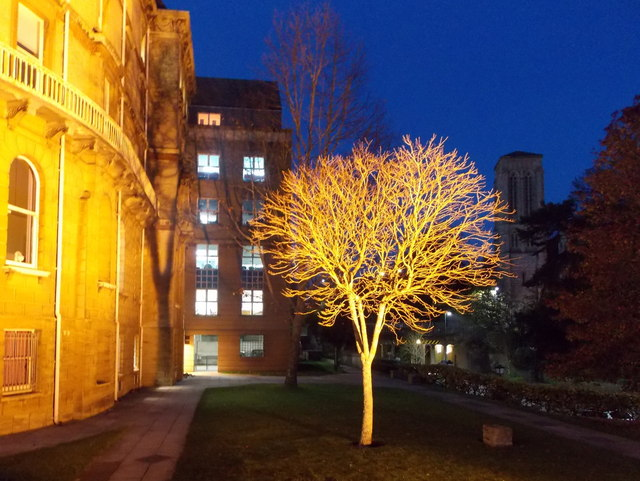 Bournemouth: a Town Hall tree is floodlit