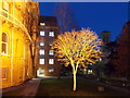 SZ0891 : Bournemouth: a Town Hall tree is floodlit by Chris Downer