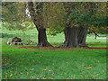 TQ0652 : Hatchlands Park by Alan Hunt