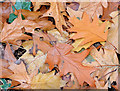 J2968 : Autumn Leaves, Dunmurry (October 2014) by Albert Bridge