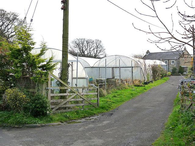 Harperley Hall Farm Nursery