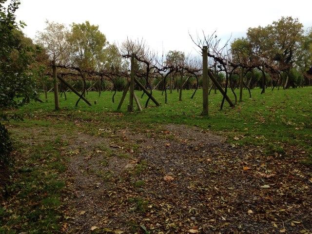 Vineyard on Old Passage Road (Severn Way)