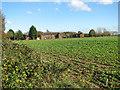 TF8324 : Crop field by RAF West Raynham by Evelyn Simak