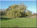 TQ0651 : Willow by Sheepwash Pond by Alan Hunt