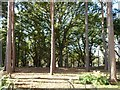 TL0036 : Mixed woodland, behind Center Parc's Oak lodges by Christine Johnstone