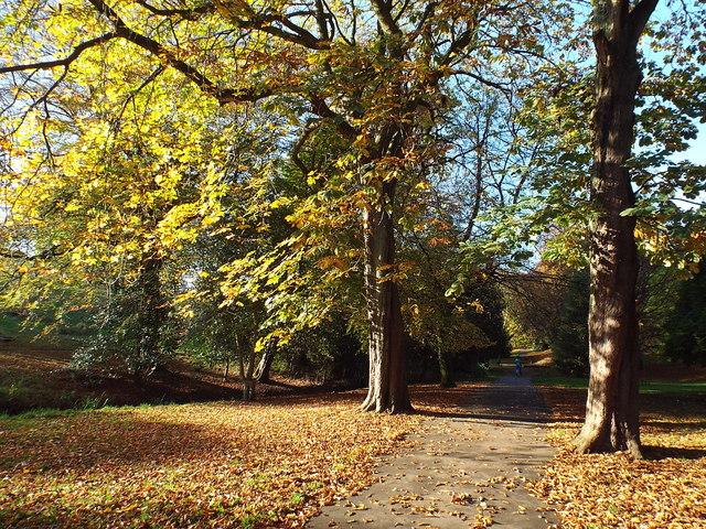 Autumn in Backhouse Park, Sunderland