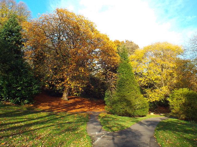 Autumn colours, Backhouse Park, Sunderland