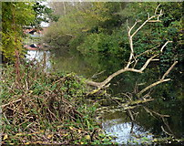 SK5702 : River Soar near St Mary's Mill Lock by Mat Fascione