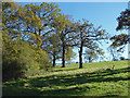 TQ0752 : Little Wix Wood, Hatchlands by Alan Hunt