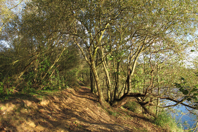 Tree lined path near lake, Belhus Woods Country Park