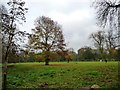 TL1232 : Autumn trees in a paddock, Apsley End by Christine Johnstone