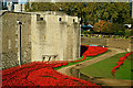 TQ3380 : Poppies at the Tower of London by Peter Trimming