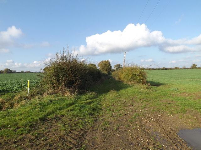 Track off the B1117 Halesworth Road
