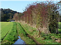 NY4655 : Field, track and hedgerow north of Great Corby by Oliver Dixon
