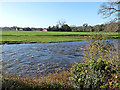 NY4756 : The River Eden in spate by Oliver Dixon