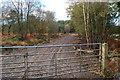 SU1011 : Track near Alderholt Common by Clive Perrin