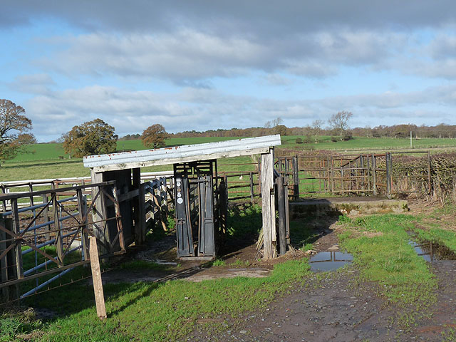 Livestock pens by the road to Cumwhitton