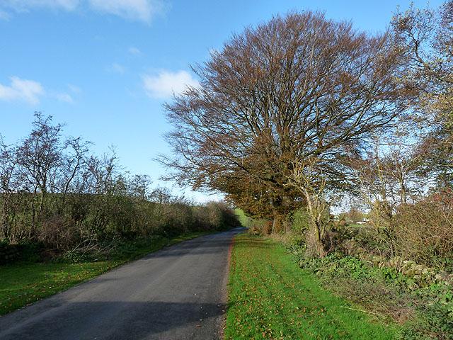 Country lane at Hallfield
