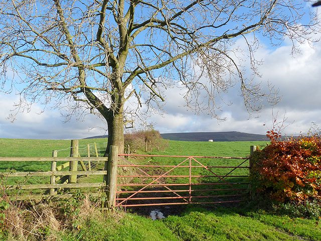 Gate, tree and fields at Moss Foot