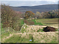 NY5355 : Field, sheep and muck heap near Black Moss by Oliver Dixon