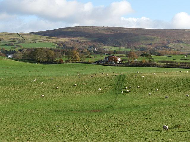 Field with sheep near Castle Carrock
