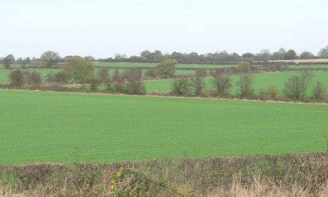 Hedged field boundaries, north of Hermitage Farm