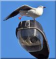 J3371 : Gull and streetlight, Belfast - November 2014(1) by Albert Bridge
