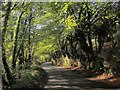 SX3869 : Callington Road by Derek Harper