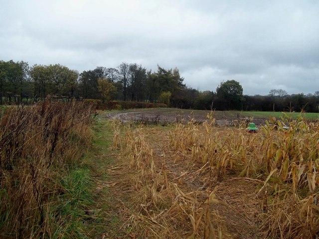 Footpath and Maize Field near North Farm House