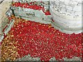 TQ3380 : Stemless poppies in the Tower of London moat by Fly