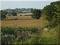 SP2079 : Fields of maize east of Walsal End by Robin Stott