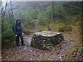SD3294 : 'Pyxis', Grizedale Forest by Karl and Ali