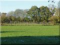 TQ0062 : Paddocks near Fairoaks Airfield by Alan Hunt