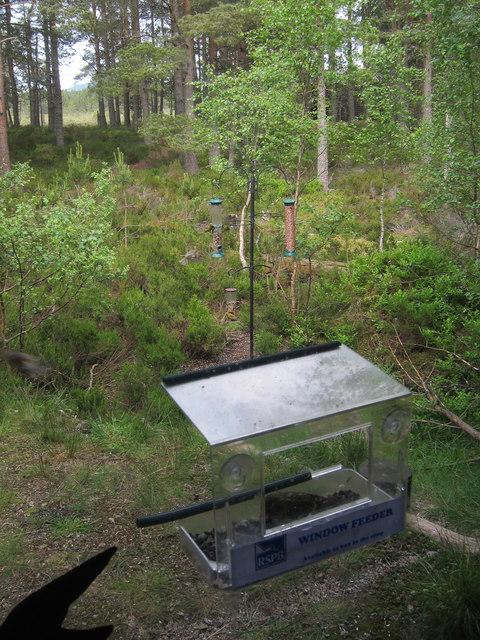 Feeding station, Loch Garten Osprey centre