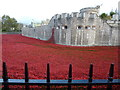 TQ3380 : Poppies at The Tower of London #9 by Richard Humphrey