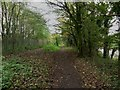 NY3856 : Path by the River Eden, Carlisle by Graham Robson