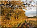 SE9445 : Field  track  western  edge  of  Dalton  Wood by Martin Dawes