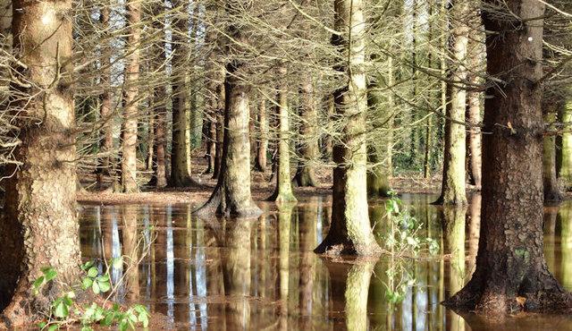 Flooding, Clement Wilson Park, Belfast - November 2014(3)