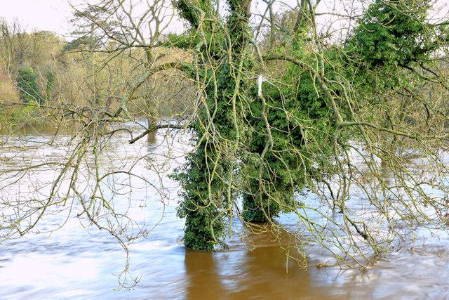 The River Lagan in flood, Drumbeg, Dunmurry - November 2014(4)