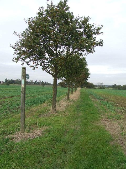 Tree Line Footpath