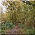TL6201 : Autumn colours in Mapletree Lane, Fryerning by Roger Jones