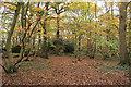TL6201 : Bell Grove, Fryerning by Roger Jones