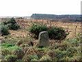 NY9955 : The Hare Stone near Slaley Hall by Andrew Curtis