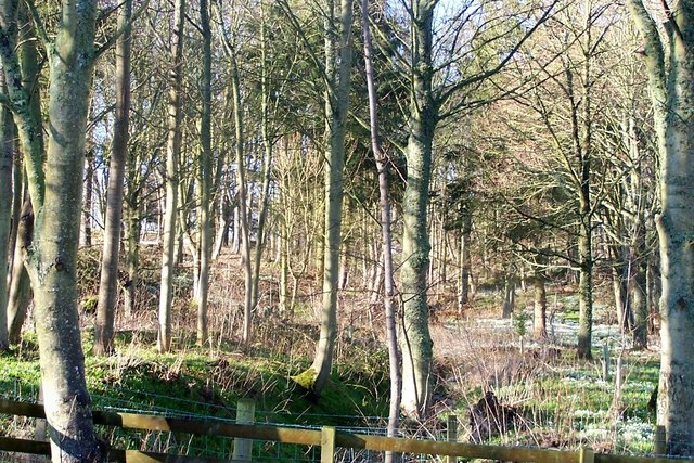 Copse of young trees
