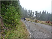 SN8749 : On the east side of the Nant Cerdin by Richard Law