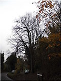 TQ1853 : Tree on Headley Lane by David Howard
